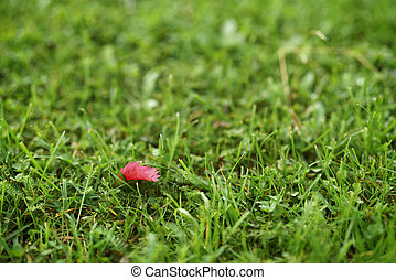 red autumn leaf on green grass