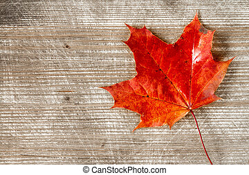 Red autumn leaf over wooden background