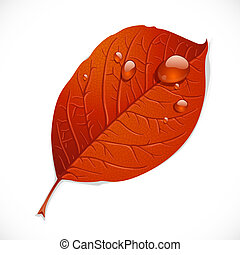 Red autumn leaf with drops of rubble isolated on a white background