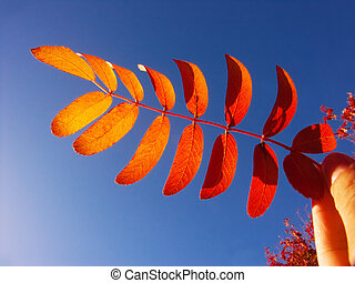Red autumn leaves in the hand and the sky