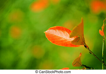 Red autumn leaves on a green background still fresh vegetation