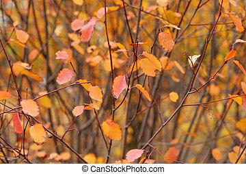 Red autumn leaves on shrub