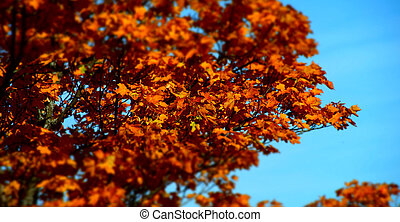 Red autumnal leaves on blue sky background