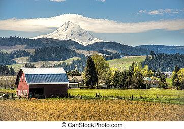 Red barn, apple orchards, Mt. Hood - Red barn among apple...
