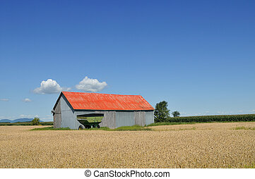 Red barn in the fields - Red barn in wheat and corn fields