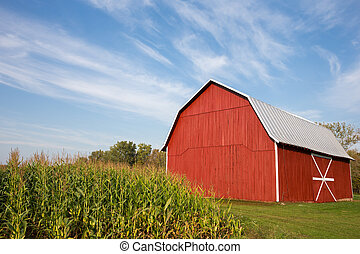 Red barn standing near late-summer corn with a dramatic blue sky in the upper frame. White accents on barn. Copy space in sky if needed.