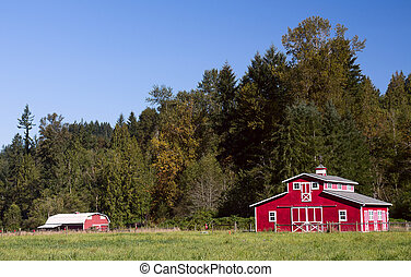 A pair of red barns in the rural western Washington summer.