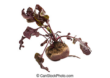 red beet with leaves on a white background