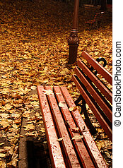 Red bench in a park in autumn. Night shoot. Great details.