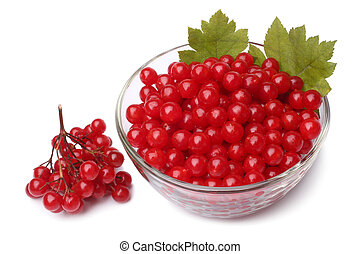 Red berries of viburnum in glass bowl on white background