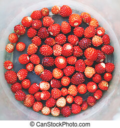 red berries of wild strawberry in a bucket top view