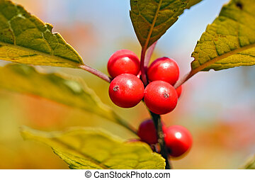 Red berries on blurry background