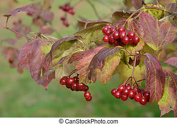 red berries on tree in autumn