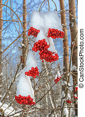 Red berries under the snow against blue sky
