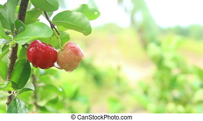 red berry background