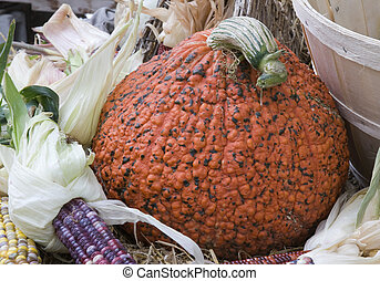 red-black pumpkin at the market