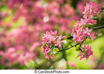 Red blooming tree in spring season detail