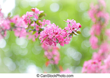 Red blossom tree blooming in spring season