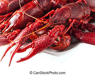 crawfishes - red boiled crawfishes over the white background...
