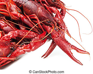 crawfishes - red boiled crawfishes over the white background