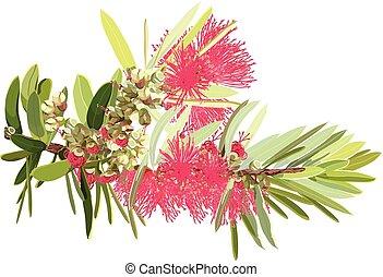 Red Bottlebrush Flowering Plant Realistic Vector ...
