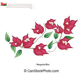 Illustration of Red Bougainvillea Flowers or Paper Flowers. One of The Most Popular Flower in Oman.