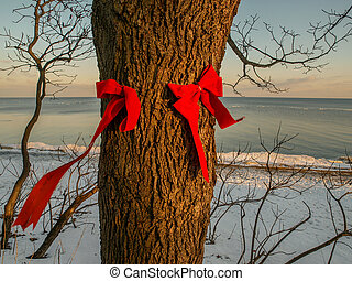 Red Bows on Tree Trunk - Two red bows attached to tree trunk...
