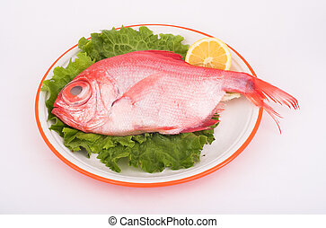 Red Bream ( fish )