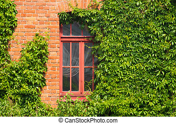 brick wall with window ivy covered