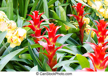 Red bromeliad rosette shape flowers
