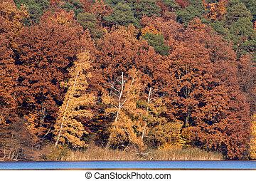red-brown, folhagem baixa, em, lago