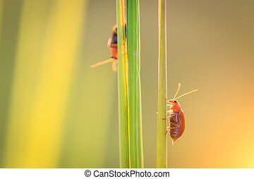 Red bug on green grass