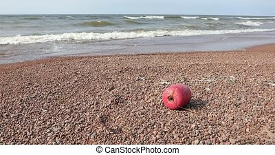 red buoy on the stone beach in the daytime.