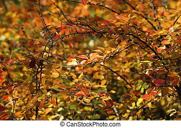 Red bush background