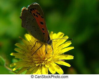 red butterfly 1