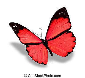Red butterfly, isolated on white background