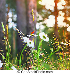 Red Butterfly On a Daisy In Summer Forest