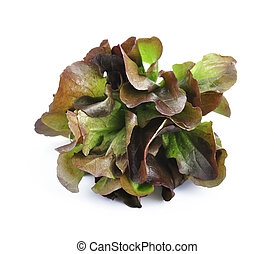 Red cabbage lettuce