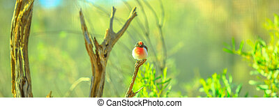 Red-capped Robin on a tree