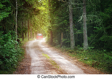 Red car on country road in wild fir forest