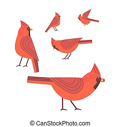 Red cardinal bird set