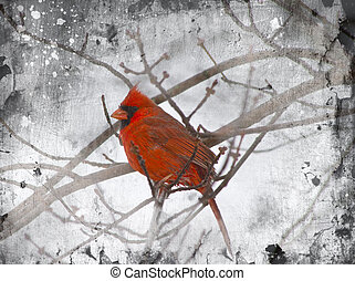 Red Cardinal Illustration - Photo of red cardinal within a ...