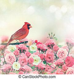 Red Cardinal In Rose Garden