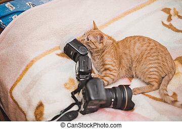 Red cat 2.