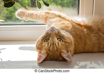 Red cat basking on a windowsill