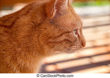 red cat - close up view of the head of a ginger cat