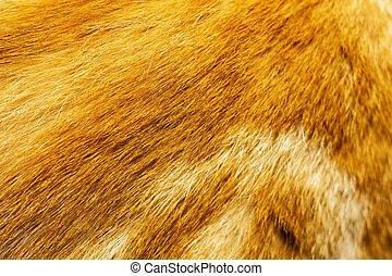 Red Cat Fur Texture