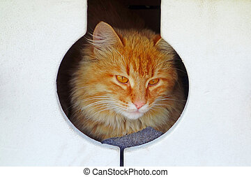 Red cat in a foam house