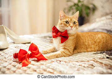 red cat in a red bow