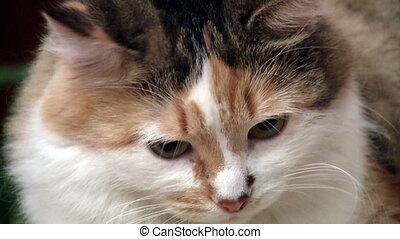 Red cat looking CU